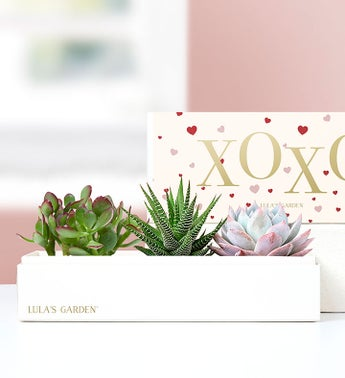 XOXO Succulents by Lulas Garden