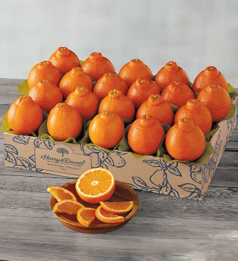 Sugar Bellestrade Citrus