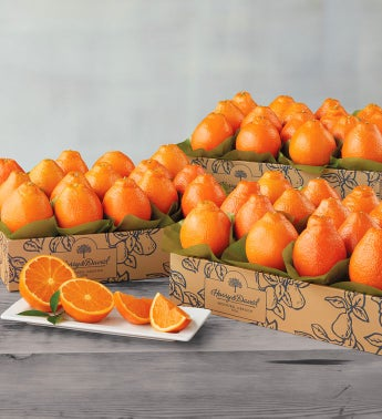 Cushman39s174 Florida HoneyBells - Three Trays